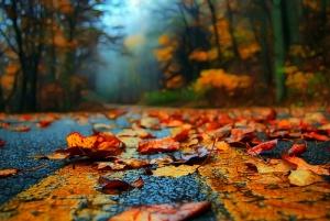 leavesonroad